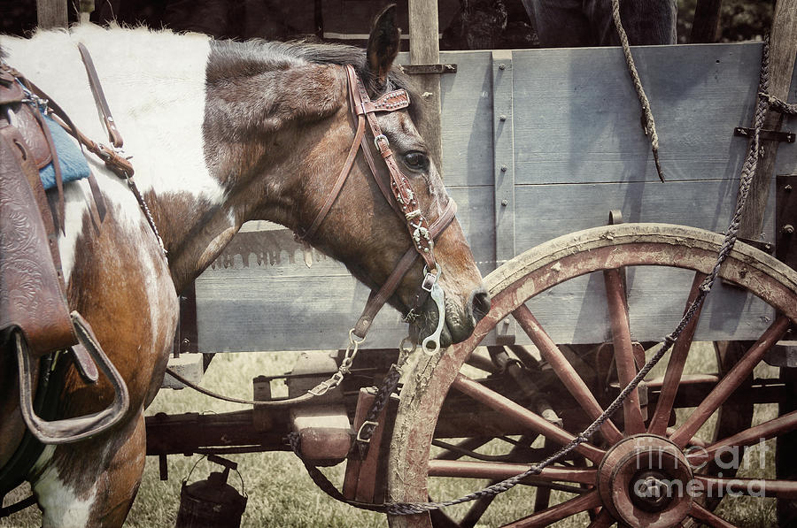 Horse Photograph - Horse And Wheel by Steven Digman