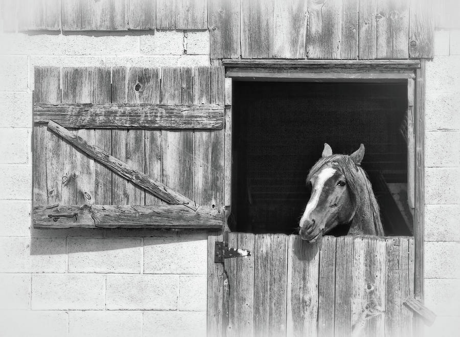 Horse At The Barn Door Photograph By Carolyn Derstine