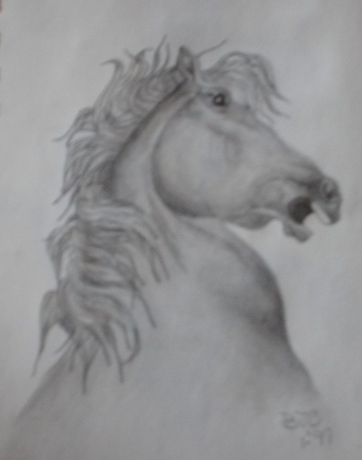 Pencil Drawing Drawing - Horse by Brenda Coster