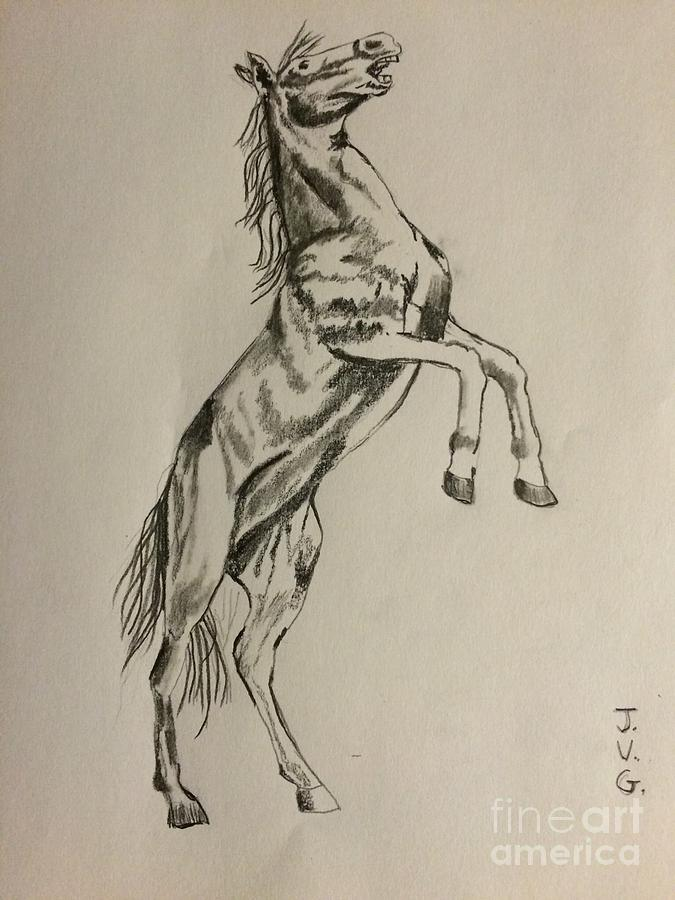 horse bucking drawing horse bucking by jean gonnella