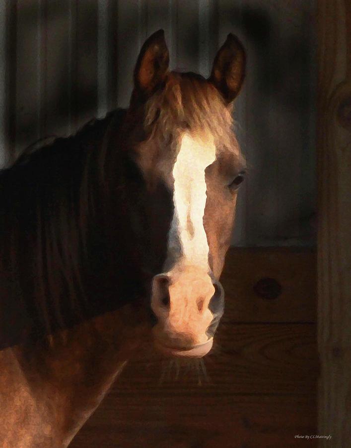 Horse Photograph - Horse by Coleman Mattingly