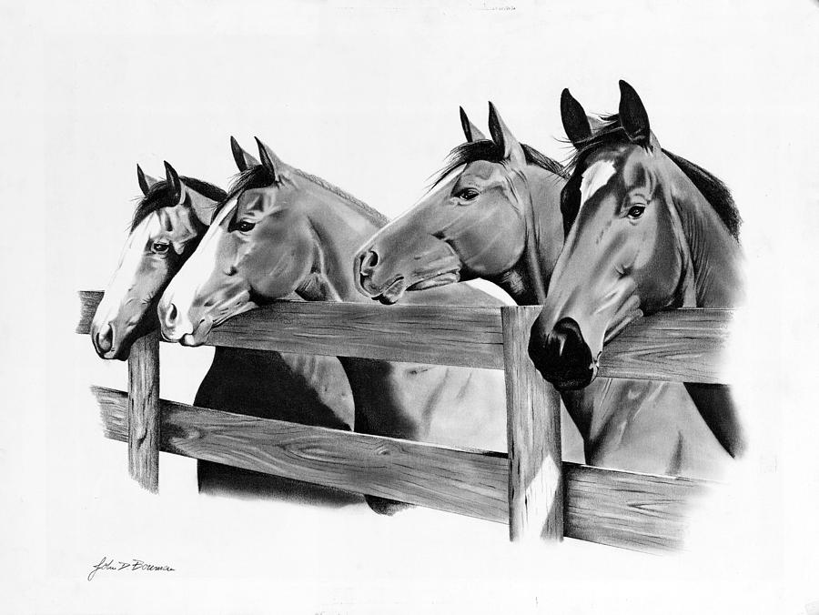 Horses Drawing - Horse Corral by John Bowman