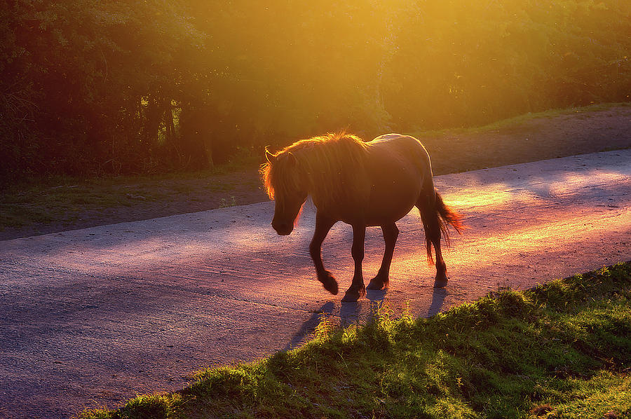Horse Photograph - Horse Crossing The Road At Sunset by Mikel Martinez de Osaba