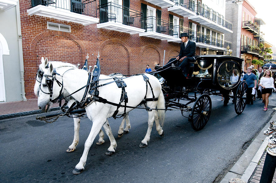 Horses Photograph - Horse Drawn Hearse by Bourbon  Street