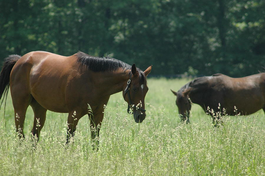 Horses Photograph - Horse Dreams Tall Grass by William A Lopez