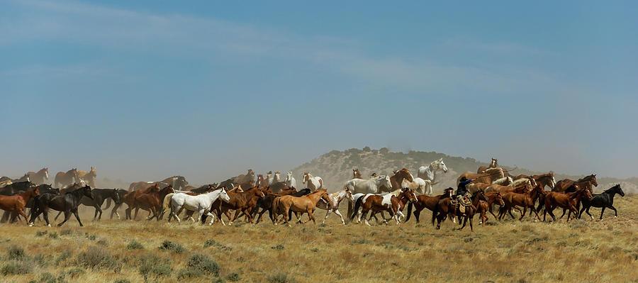Horse Drive by Pamela Steege