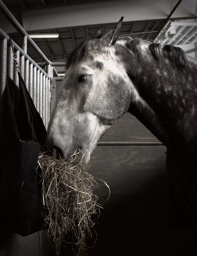 Horse Eating Hay Photograph