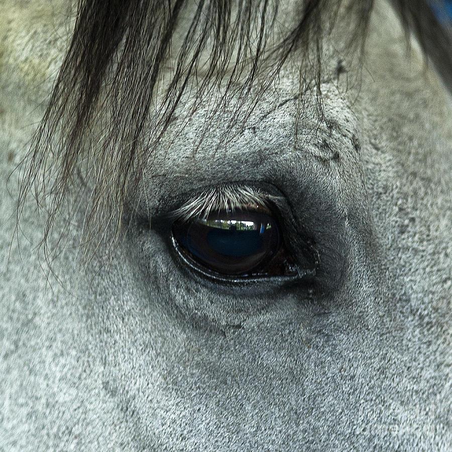 Thoroughbred Photograph - Horse Eye by John Greim