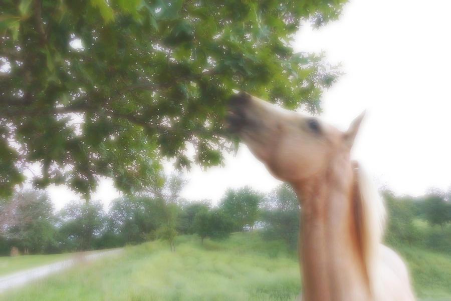 Horse Digital Art - Horse Grazes in a Tree by Jana Russon