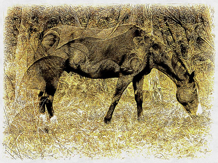 Horse Grazing on Pasture 1 by Dorothy Berry-Lound