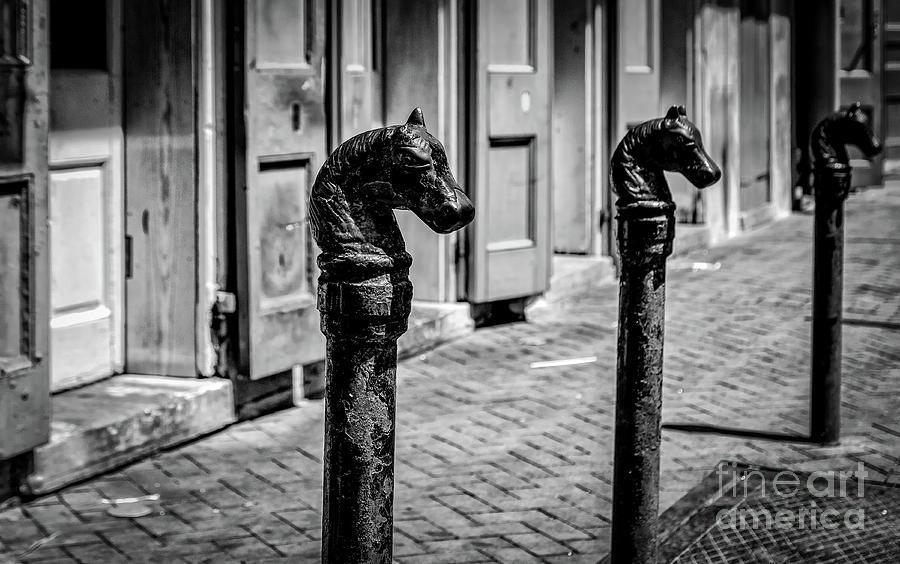 Horse Head Iron Posts French Quarter Nola Photograph