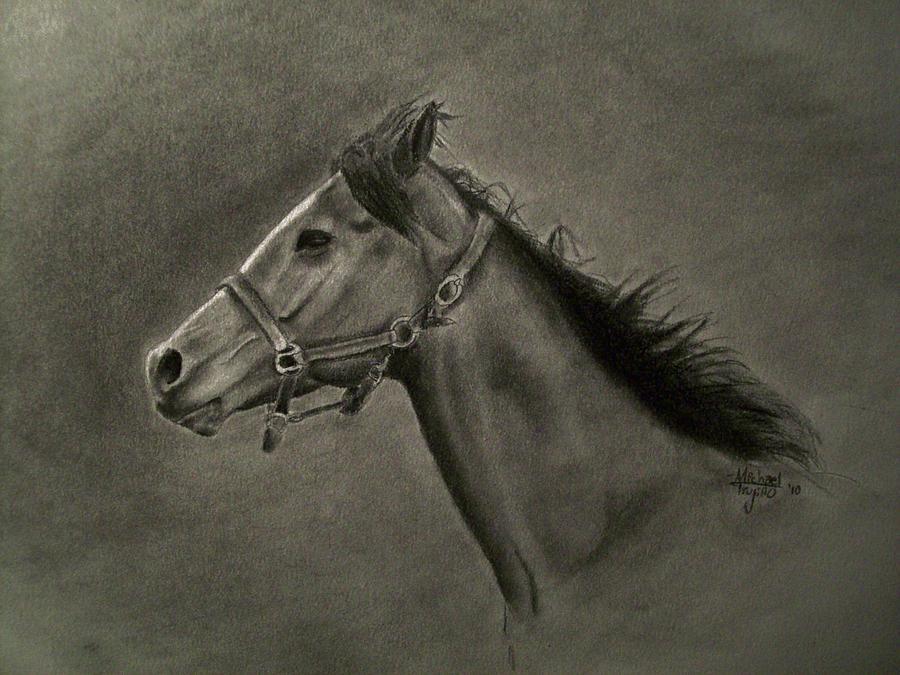 Michael Drawing - Horse Head by Michael Trujillo