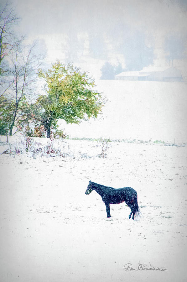 Horse In Snowy Pasture 7596 Photograph