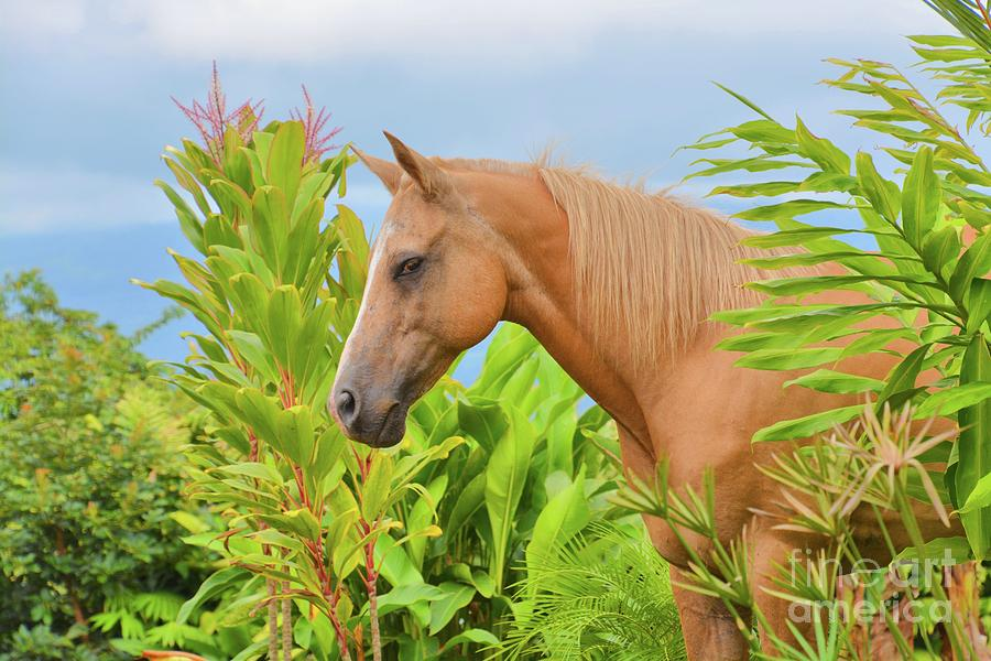 Horse in the Rainforest II by Tammie Miller