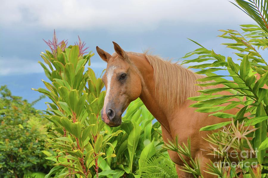 Horse in the Rainforest by Tammie Miller