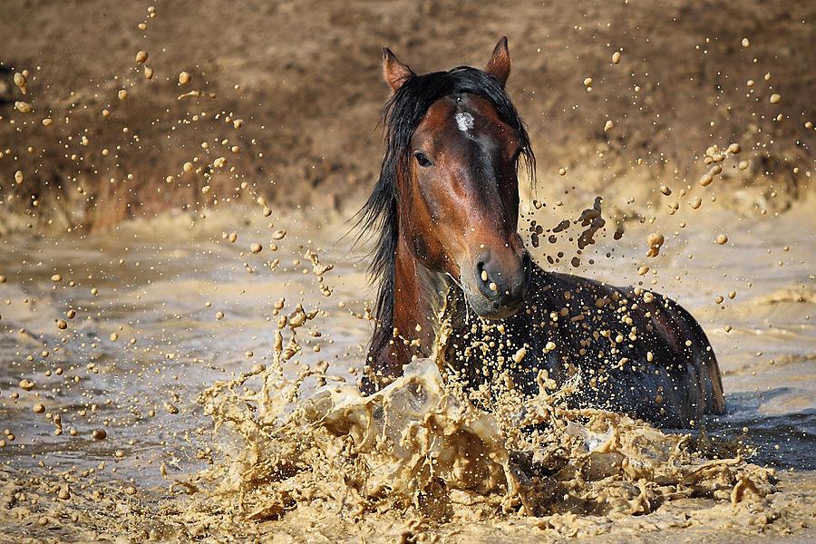 Horse Photograph - Horse In Water by Vedran Vidak