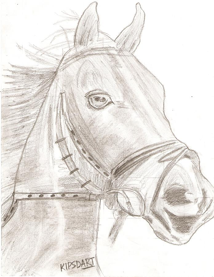 Pencil Drawing Drawing - Horse by Karthik Reddy