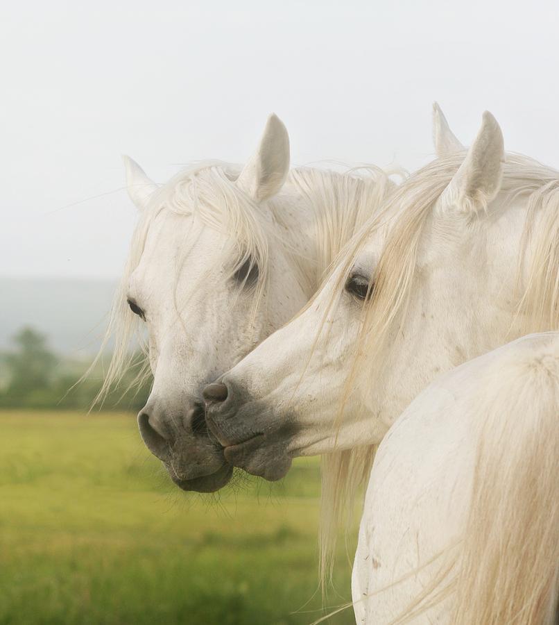 Horse Photograph - Horse Kiss by ELA-EquusArt