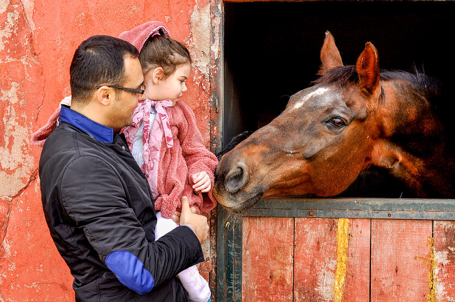 Horse Photograph - Horse Love by Freepassenger By Ozzy CG