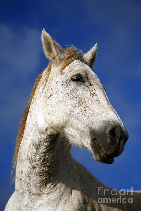 Animals Photograph - Horse Portrait by Gaspar Avila