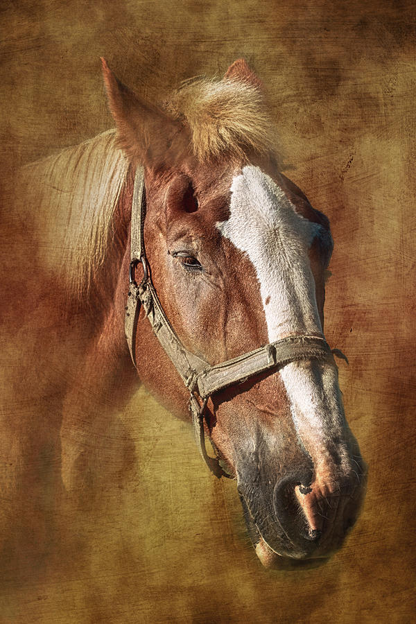 Horse Photograph - Horse Portrait II by Tom Mc Nemar