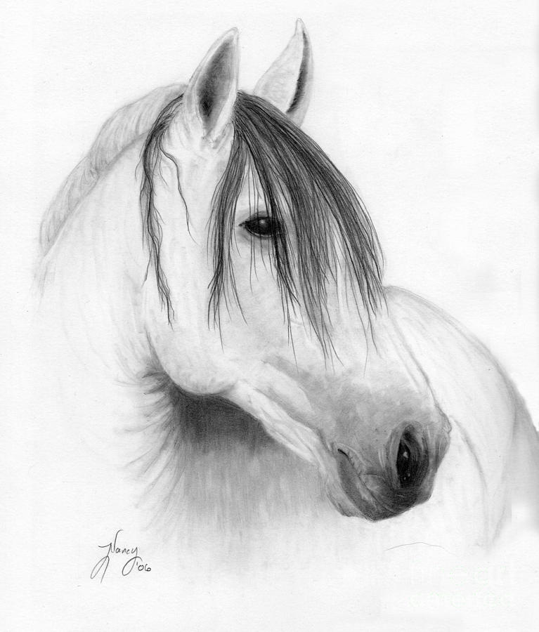 Horses Drawing - Horse Portrait by Nancy Aldrich