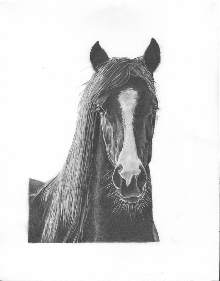 Horse Portrait Drawing - Horse Portrait by Sue Olson