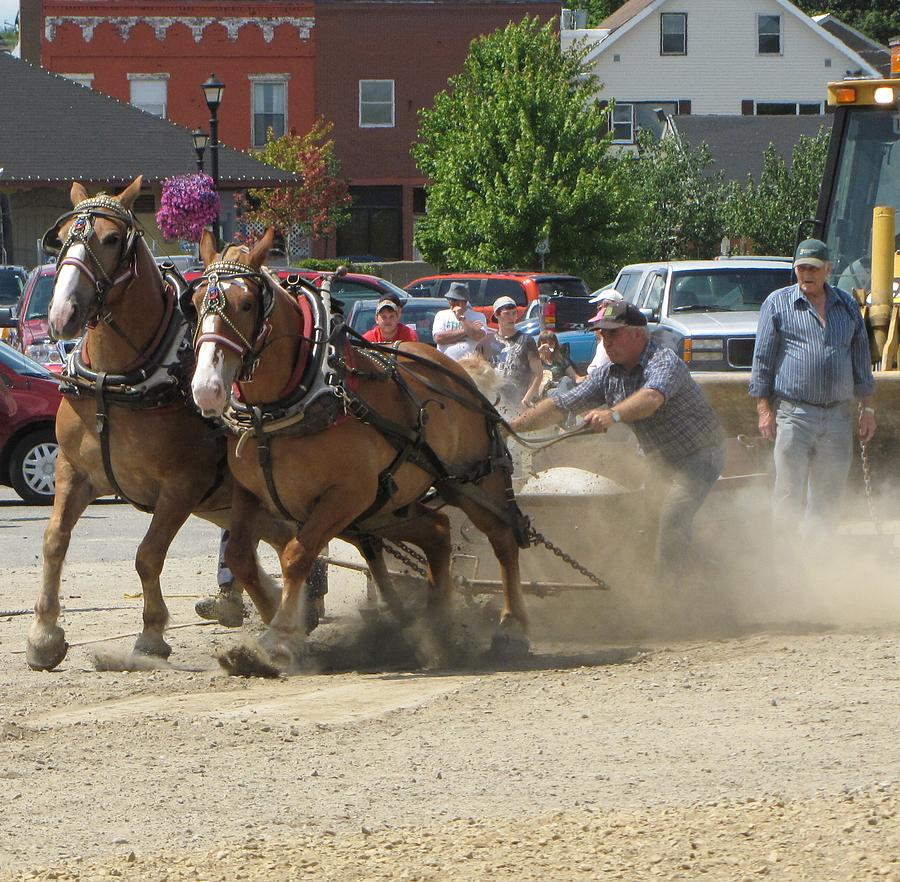 Horse Photograph - Horse Pull K by Melissa Parks