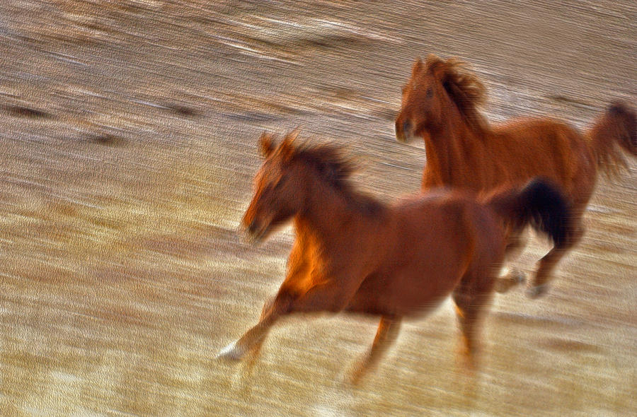 Fine Art Photography. Fine Art Horse Photography.fine Art Running Horse Photography. Horse Pictures. Fine Art Running Horse  Wall Art Photography. Two Horses. Horse Greeting Cards. Running Horse Canvas Prints.horse Raceing Greeting Cards.  Running Horse Greeting Cards.galloping Horse Wall Art. Galloping Red Horse Photography. Photograph - Horse Race by James Steele