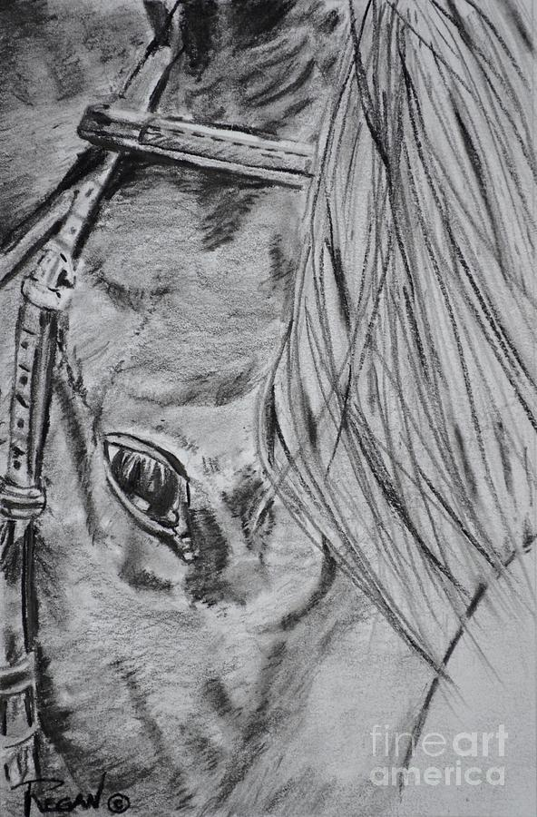 Horse Head Drawing - Horse by Regan J Smith