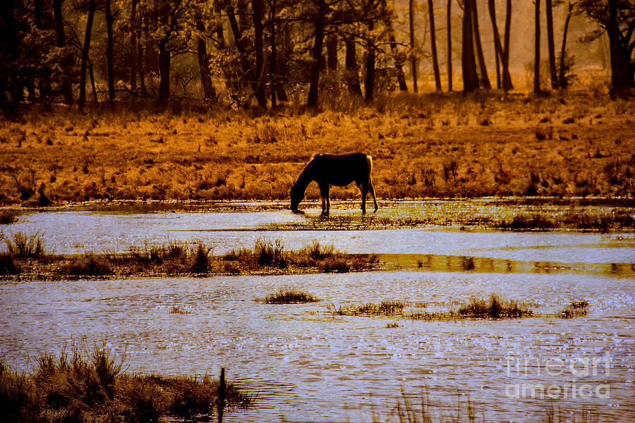 Wild Photograph - Horse Silhouetted by Tom Gari Gallery-Three-Photography