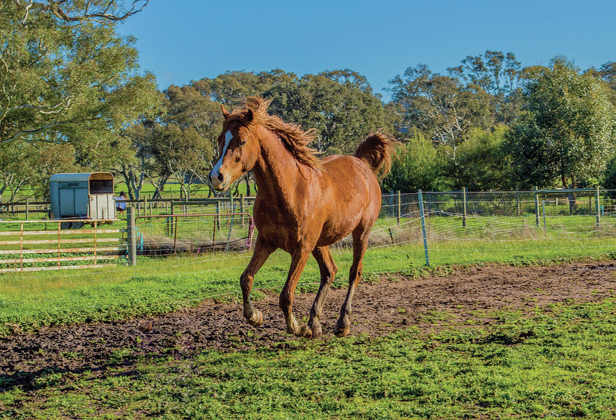 Horse Trot Photograph