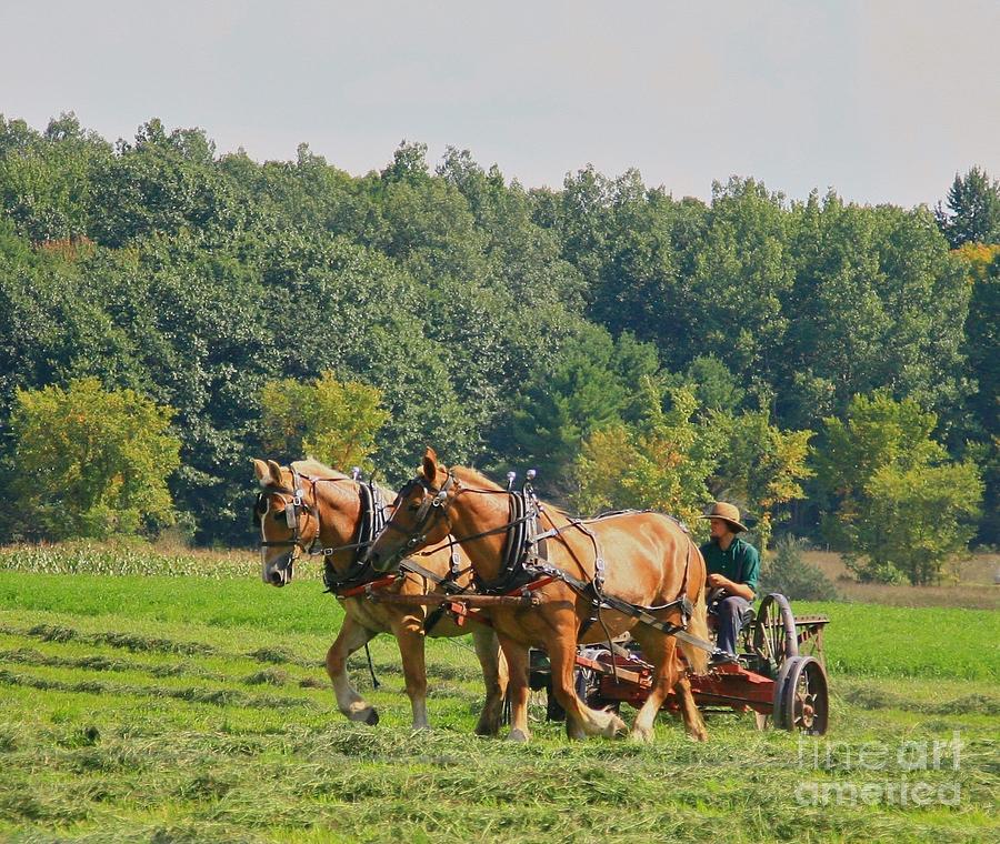 Farm Photograph - Horsen Around by Robert Pearson