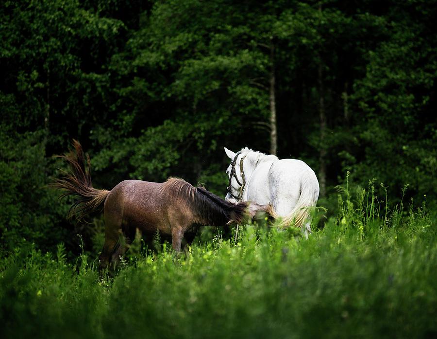 Beautiful Photograph - Horses 2 by Ivan Vukelic