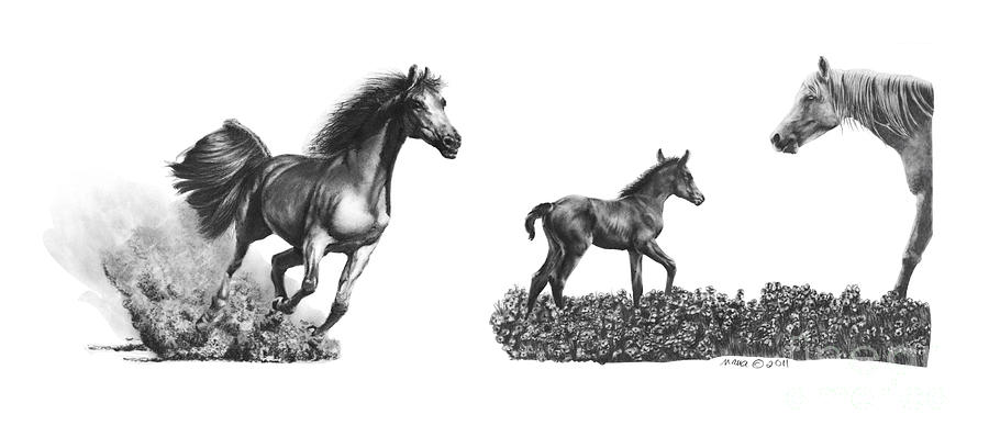 Horses  Arabians by Marianne NANA Betts