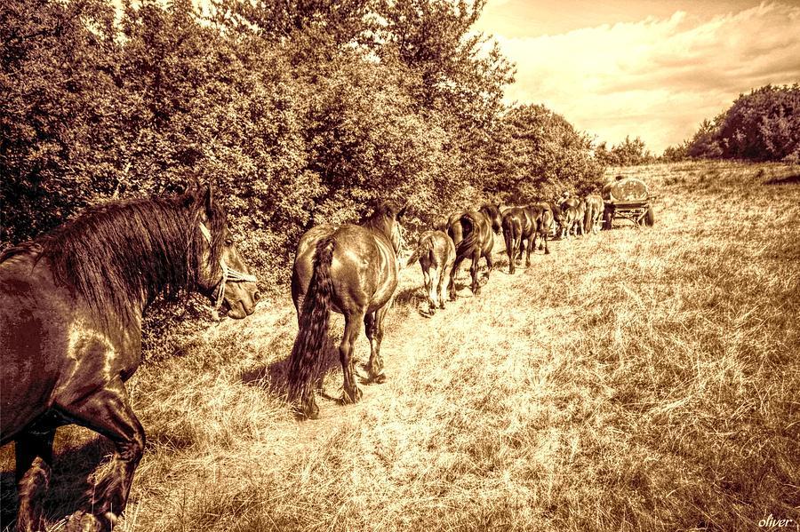 Horses  Mixed Media by Bill Oliver