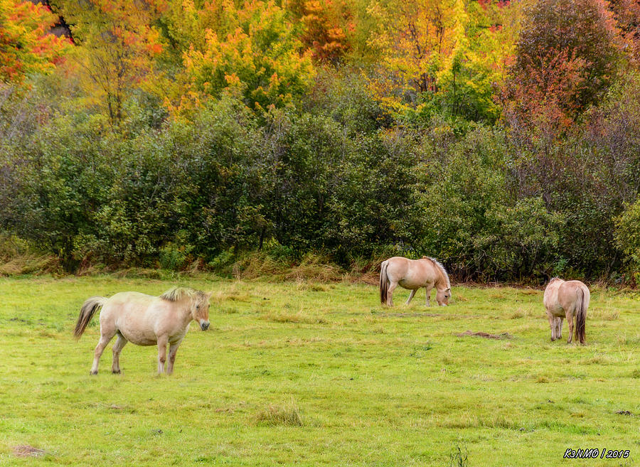 Cape Breton Photograph - Horses Enjoying A Beautiful Autumn Day by Ken Morris