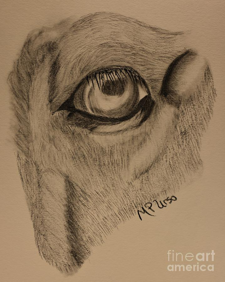 Horse S Eye Abstract