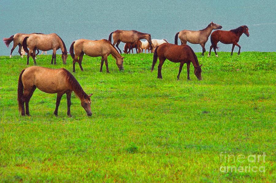 Paso Fino Digital Art - Horses Graze By Seaside by Thomas R Fletcher