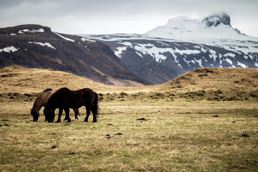 Photo Photograph - Horses Grazing by Ryan Stoddard