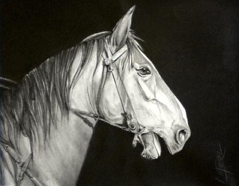 Horse Drawing - Horses Head by Carlos Alvarez