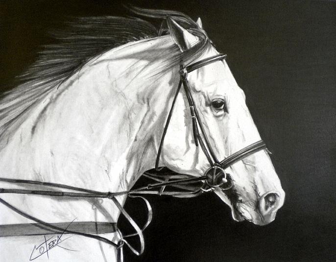 Horse Drawing - Horses Head II by Carlos Alvarez
