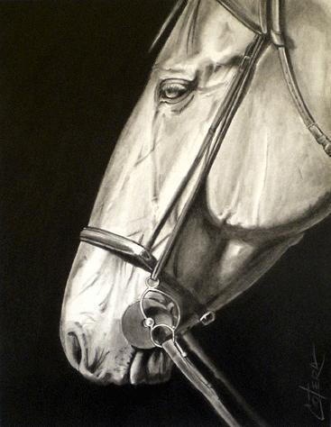 Horse Drawing - Horses Head IIi by Carlos Alvarez