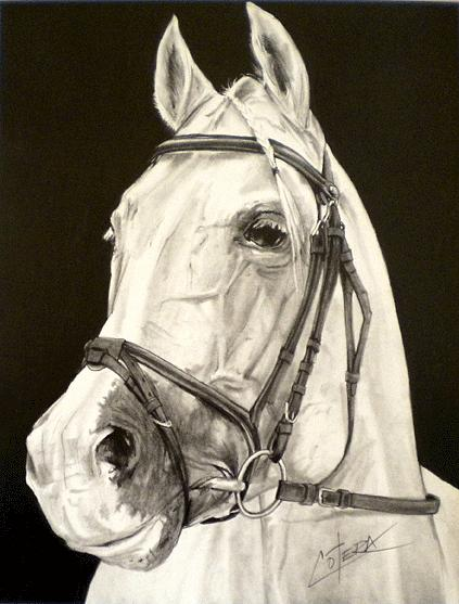Horse Drawing - Horses Head Vi by Carlos Alvarez