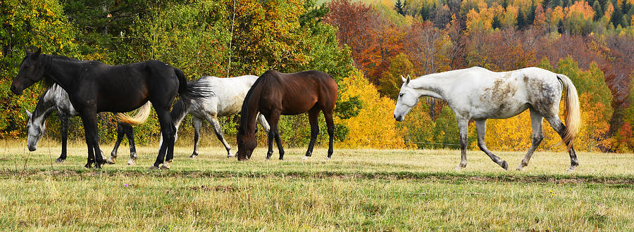 Autumn Photograph - Horses In Autumn by Predrag Lukic