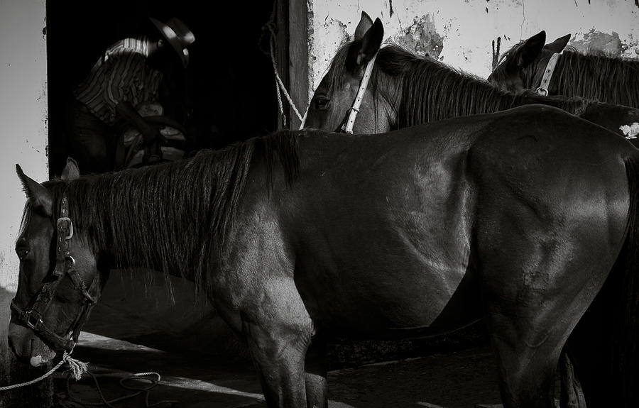 Horse Photograph - Horses In Mexico by Dane Strom