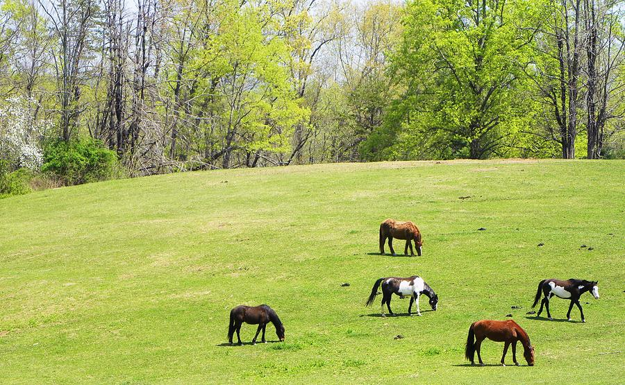 Spring Photograph - Horses In Spring by Cindy Gacha