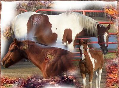 Horse Photograph - Horses In The Fall by Cynthia K Shoemaker