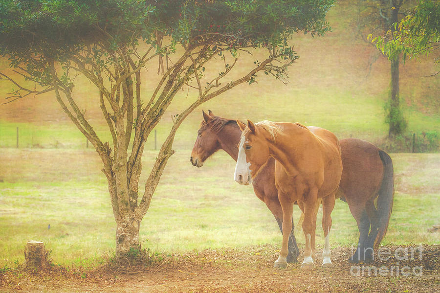 Horses In The Meadow Photograph