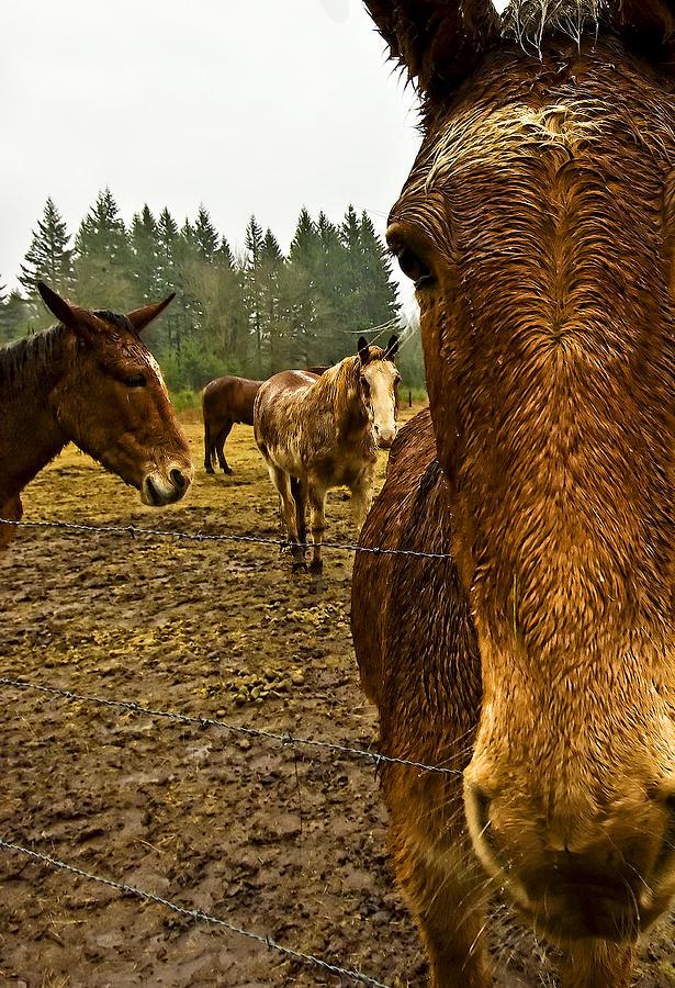 Horse Photograph - Horses In The Rain by Dale Stillman